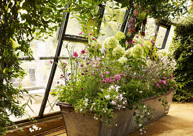 Image courtesy of Petersham Nurseries.