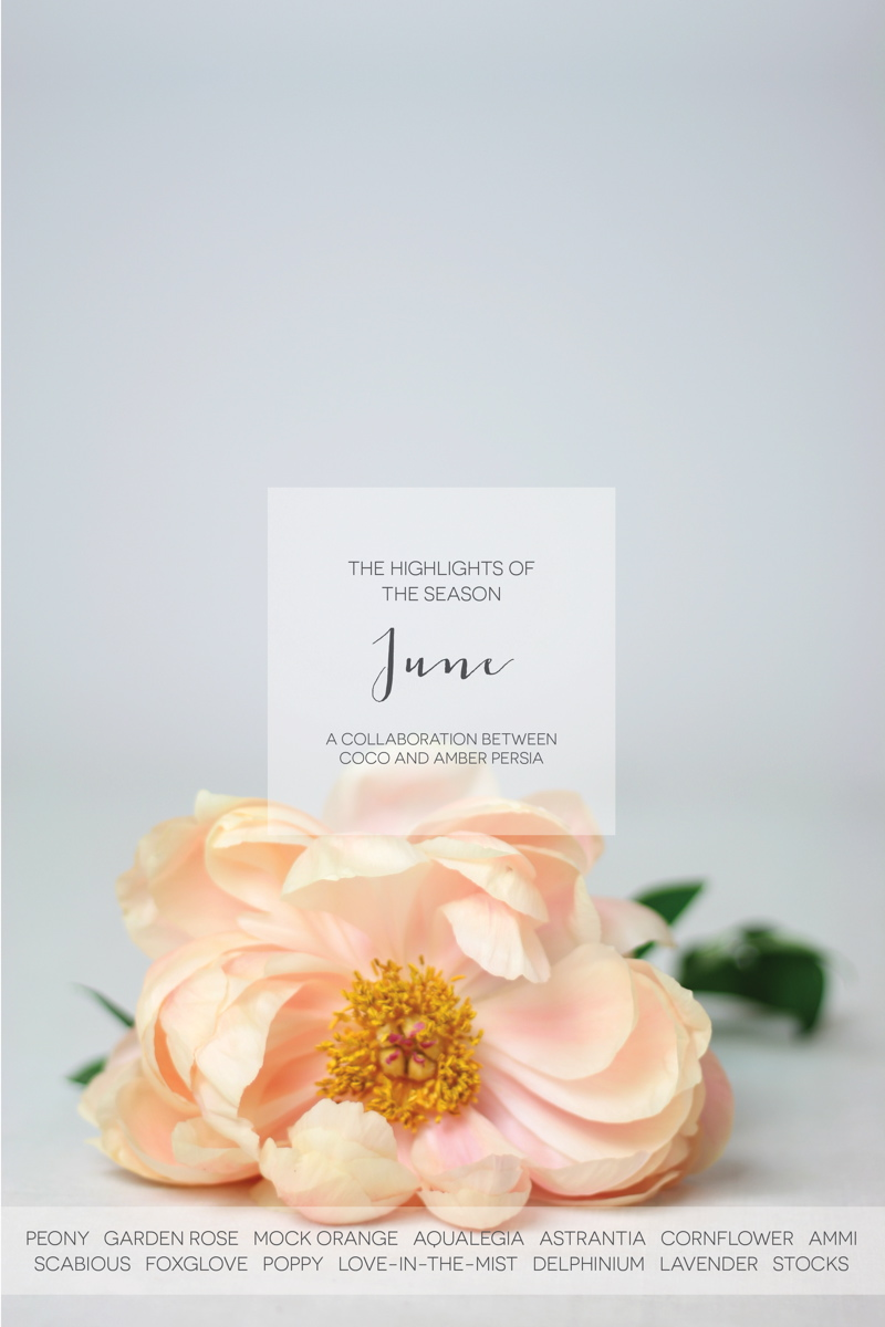 coco-wedding-venues-wedding-flower-inspiration-june-floral-highlights-by-amber-persia-flowers-and-events-2