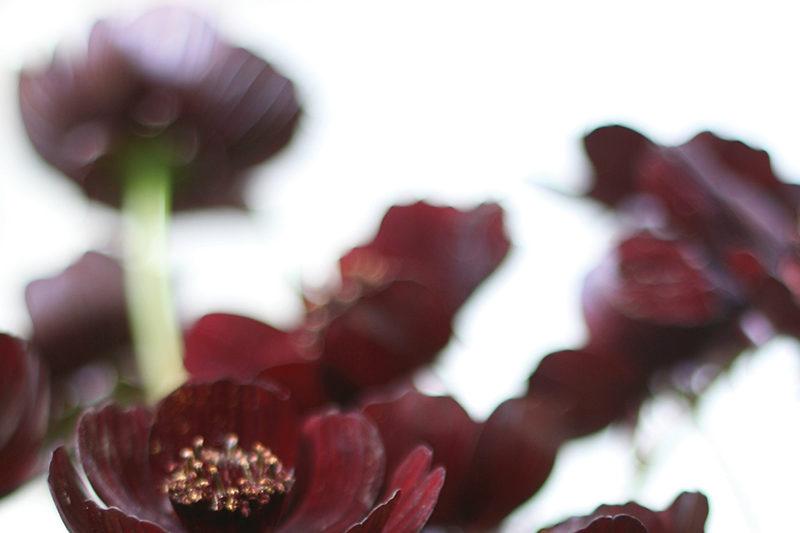 wedding-flower-inspiration-floral-highlights-october-new
