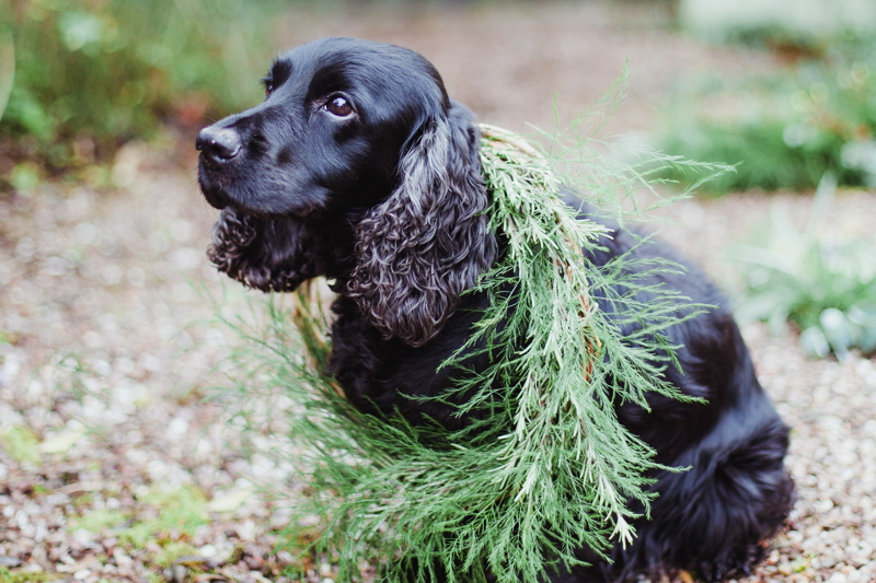 christmas-wreath-diy-flowers-by-breige-sandon-hall-wedding-venue-coco-wedding-venues-jade-osborne-photography-58