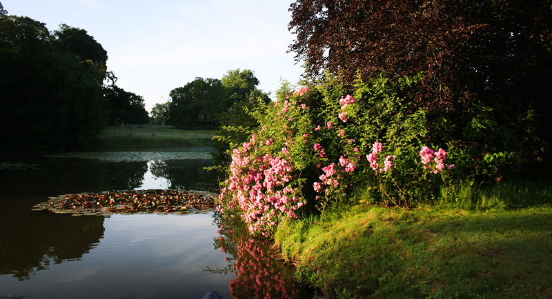 Image courtesy of Narborough Hall Gardens.