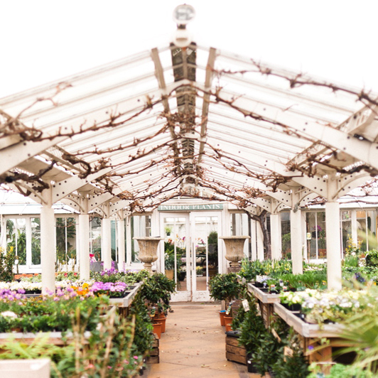 Clifton Nurseries | Image by Anushé Low.