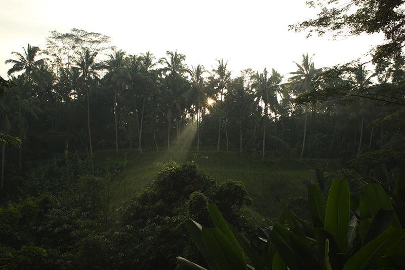Images courtesy of Alila Ubud.